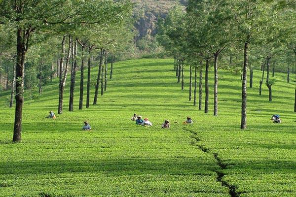 Munnar Kerala Tour Package Site