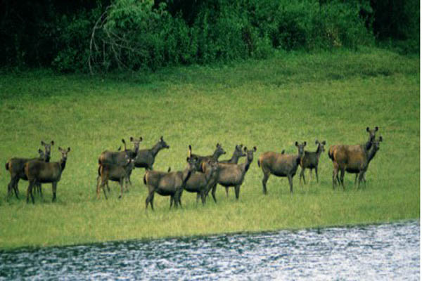 Periyar Kerala Tour Package Site