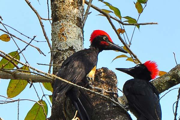 Bird Watching At Thattekad Sanctuary Kerala Tour Package Site