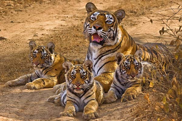 golden triangle tour with tigers Kerala Tour Package Site