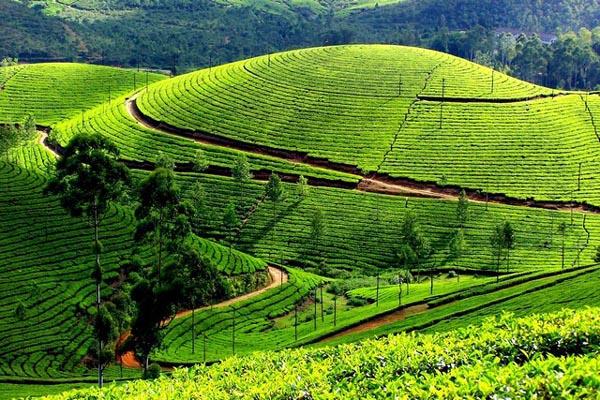 munnar kerala Kerala Tour Package Site