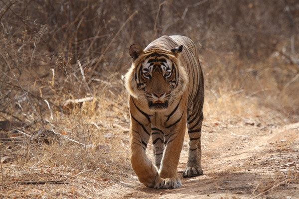 southern delights with tigers Kerala Tour Package Site